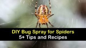 DIY bug spray for spiders titleimg1