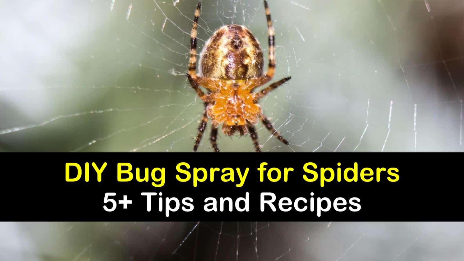 DIY bug spray for spiders titleimg1