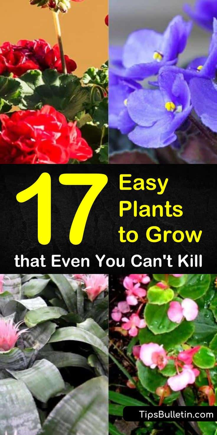 Whether you are starting a vegetable garden or trying to grow plants indoors, not everybody has a green thumb. We provide you with a list of 17 plants that you can grow indoors or outdoors easily without fear of killing them. #easytogrowplants #hardtokillplants #easyplants