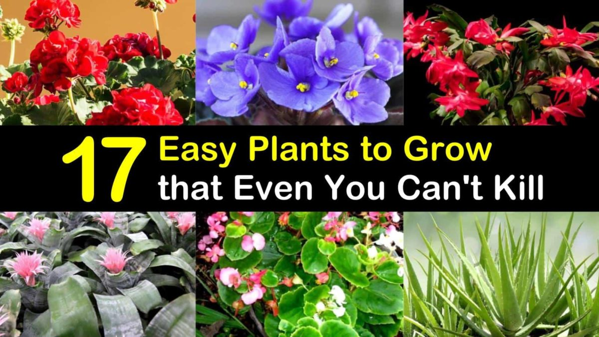 17 Easy Plants to Grow that Even You Can't Kill