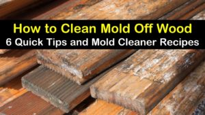 how to clean mold off wood titleimg1