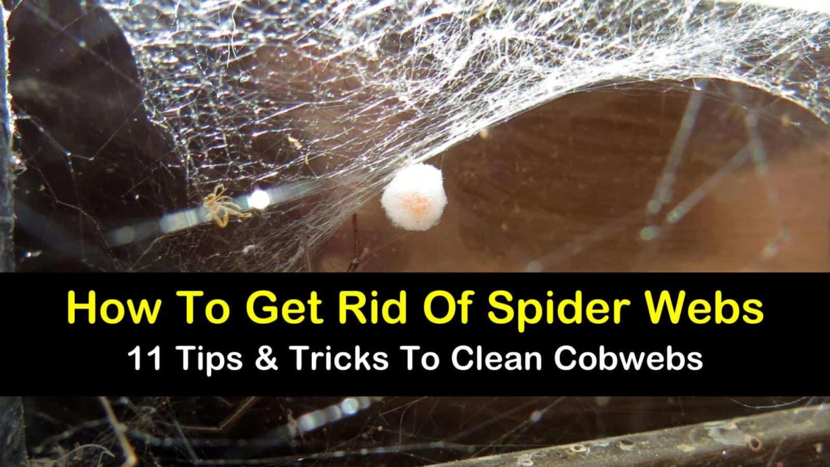 how to get rid of spider webs t1 1200x675 - How To Get Rid Of Spider Webs On Grass