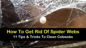 how to get rid of spider webs titleimg1