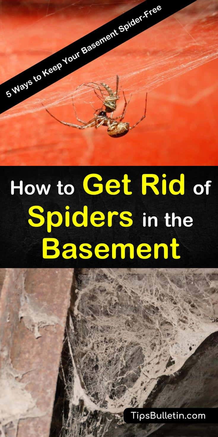 This guide will teach you how to keep your basement spider-free with natural, DIY solutions. If you follow the steps in this guide, you'll see far fewer spiders in your home, and hopefully, you'll never find another one in your basement again! #spiders #basement #cellarspiders