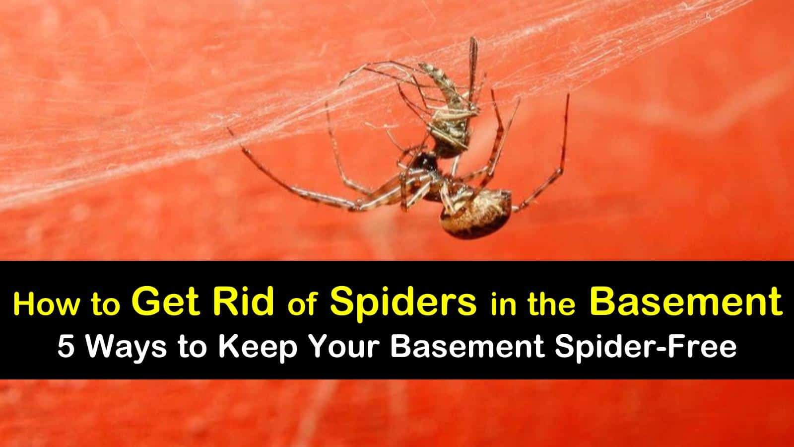 how to get rid of spiders in the basement titleimg1