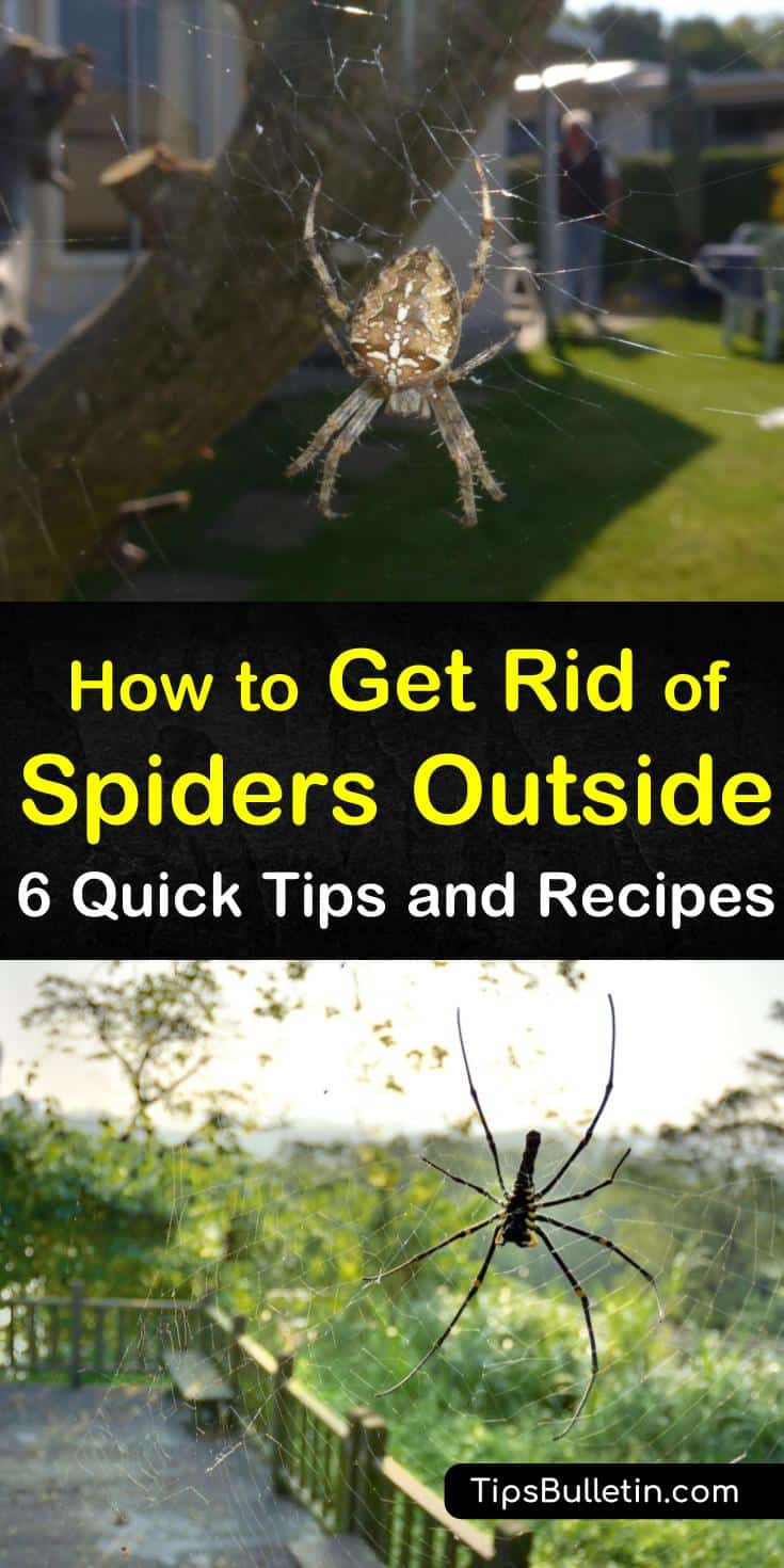 We show you how to get rid of spiders from around the house using natural methods. We have DIY recipes for getting rid of spiders using essential oils, proper lighting, and vinegar spray. #killspiders #getridofspiders #killspidersnaturally