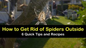 how to get rid of spiders outside titleimg1