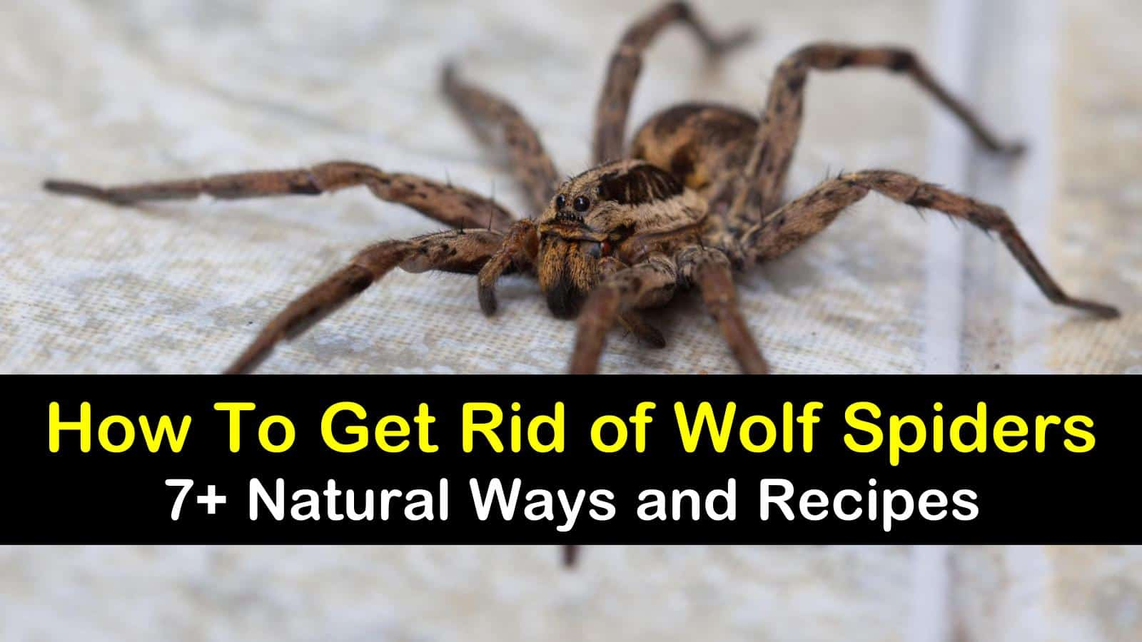 how to get rid of wolf spiders titleimg1