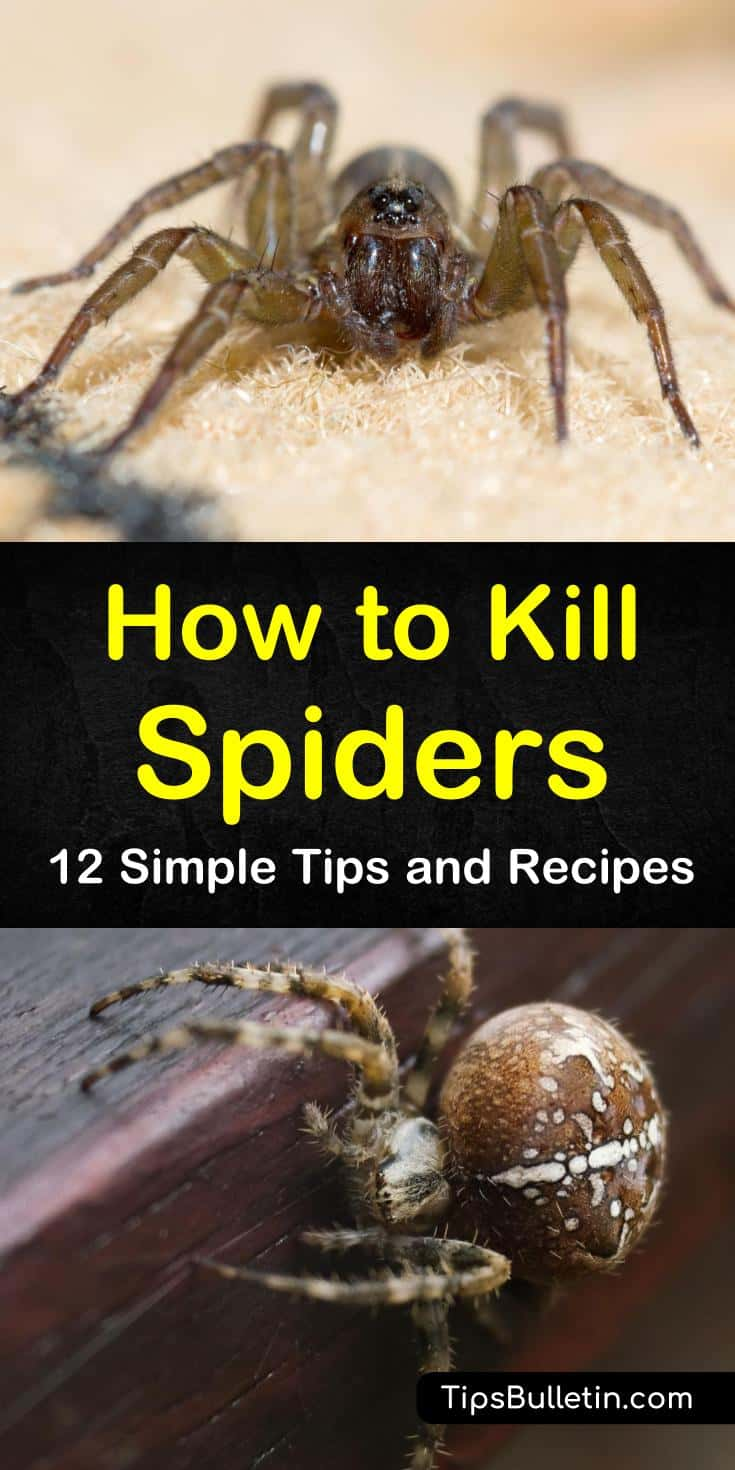 Find out how to kill spiders in the house instantly with our guide. We show you how to make DIY spider killers and kill your eight-legged guests naturally. Spiders in your home and in your yard will keep their distance after you finish this article. #killspider #spiders #getridofspiders