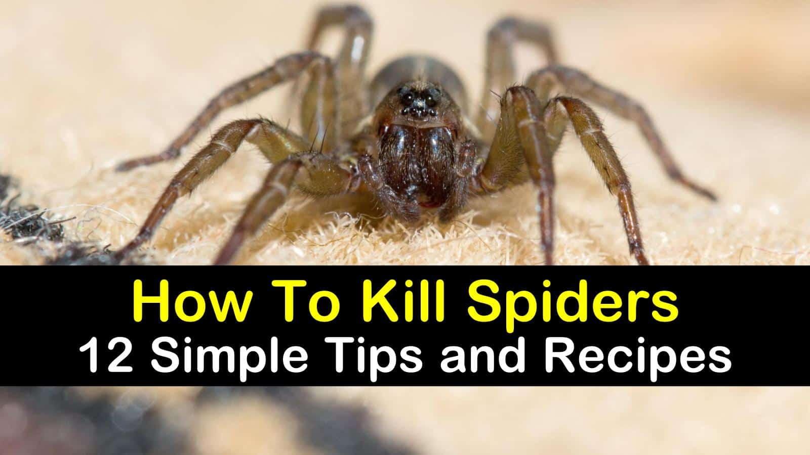 how to kill spiders titleimg1
