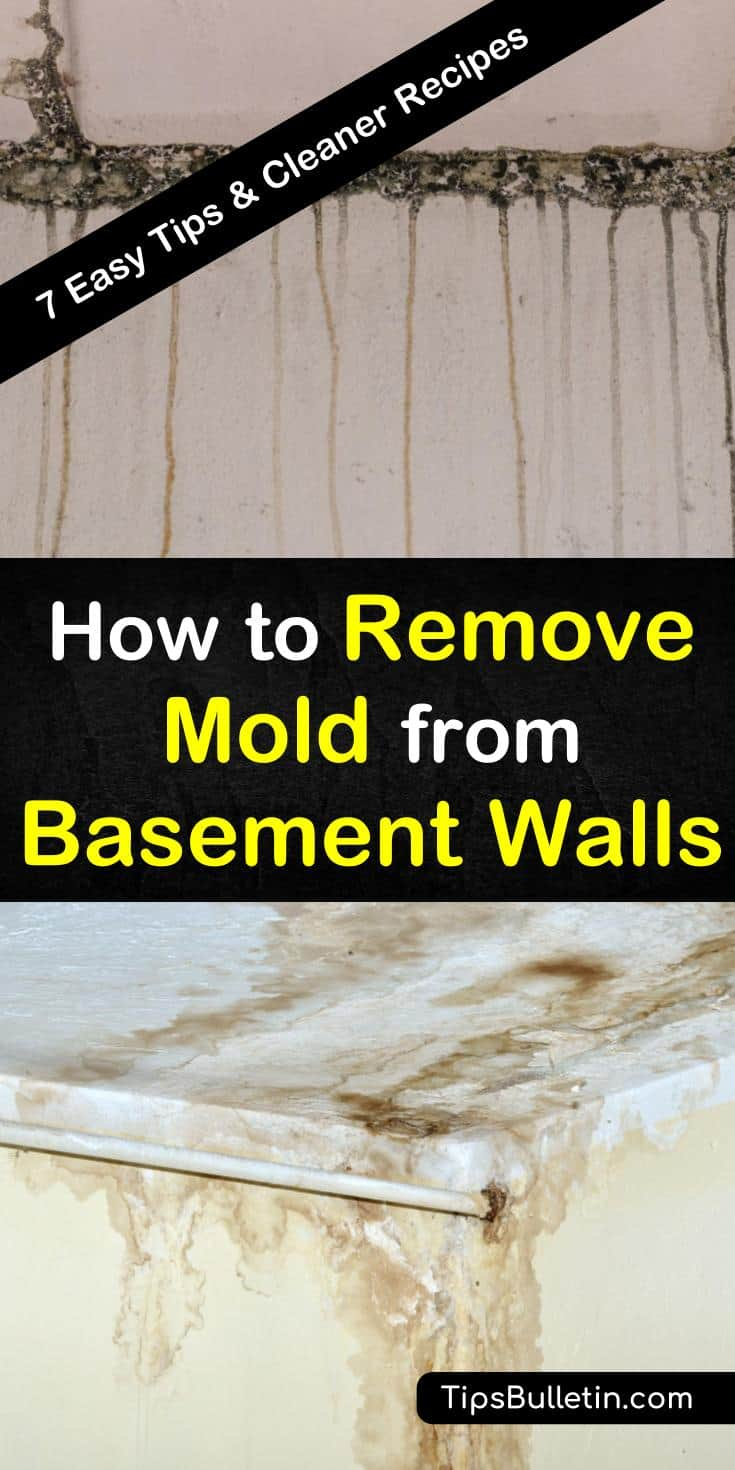 Learn about the best ways to clean mold, mildew, and other contaminants from the walls of your basement with natural cleaners in this guide. Mold and mildew are not only eyesores, but they can be unhealthy to have in your house, too. #mold #mildew #basement