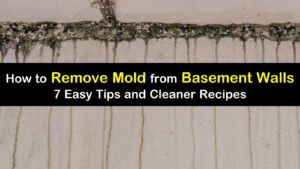 how to remove mold from basement walls titleimg1