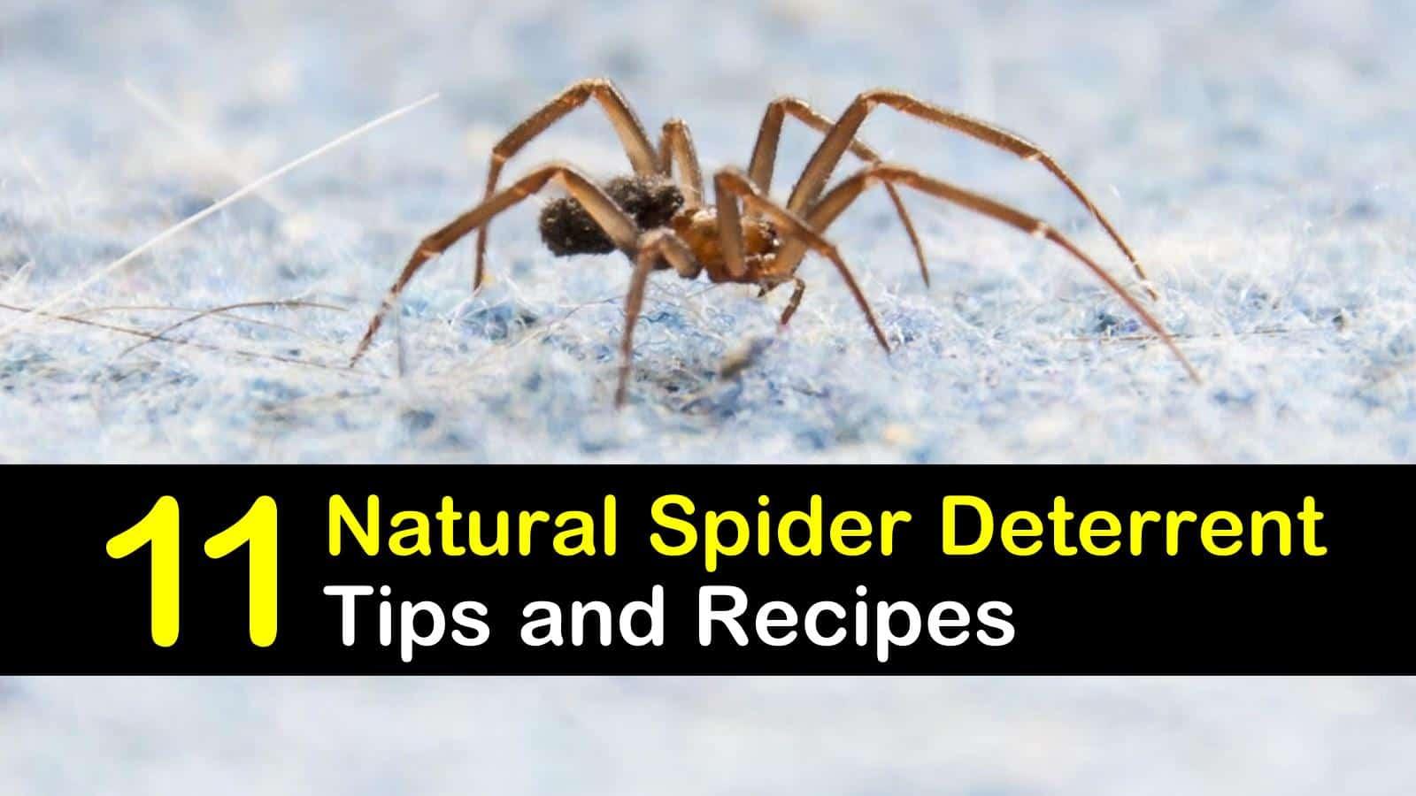 spider deterrent titleimg1