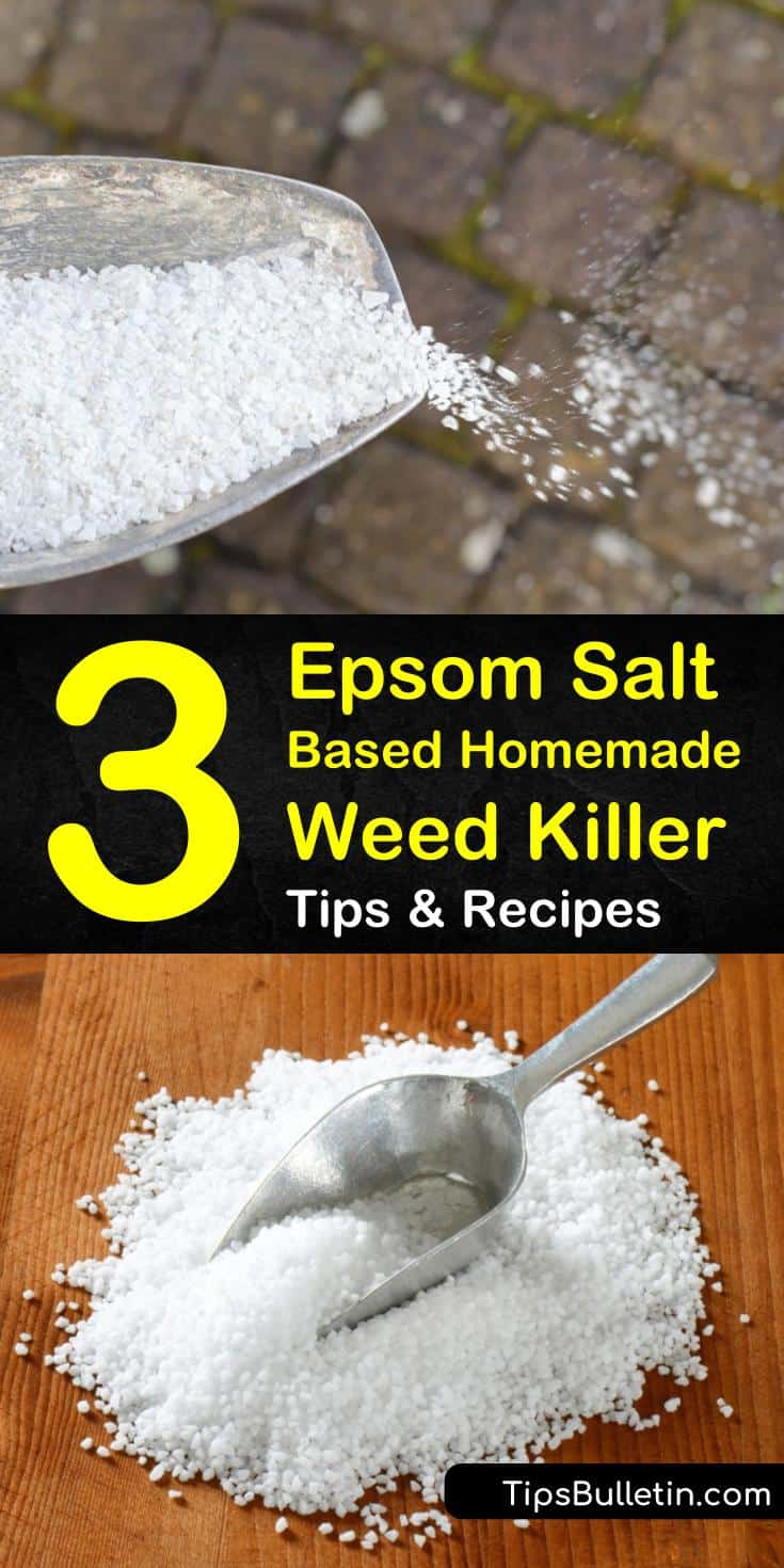 Learn how to make and deploy an Epsom salt based homemade weed killer, and get your lawn looking gorgeous. Our guide shows you how to kill weeds with vinegar, dish soap, and more. You'll be prepared to take on all weeds in your lawn. #weedkiller #epsomsalt #killweeds