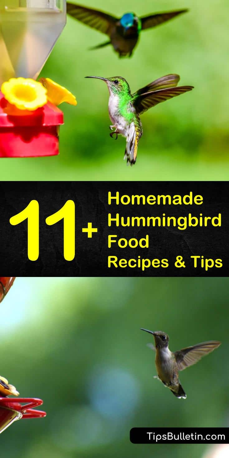 Try these homemade hummingbird food recipes and tips that make it easy to serve up natural nectar. Learn how to keep ants and bees out of your feeder and which flowers attract hummingbirds. Discover how to make these DIY recipes, and which products to avoid. #homemade #hummingbird #food #recipes