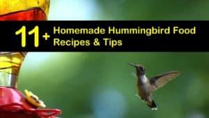 homemade hummingbird food recipes titleimg1