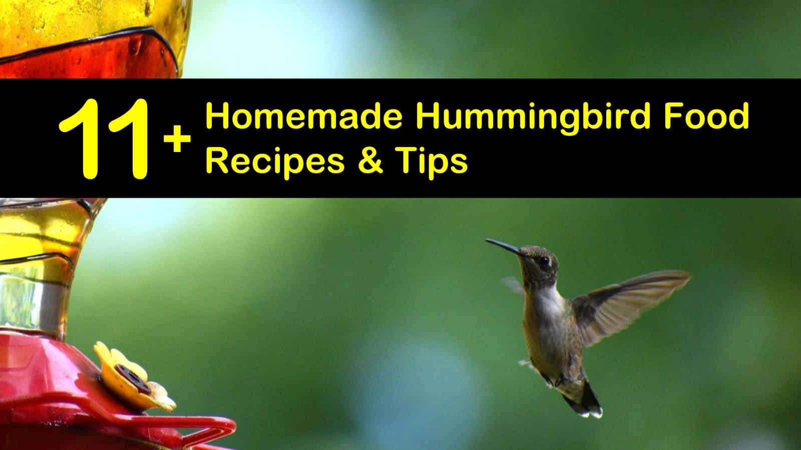 11+ DIY Hummingbird Food Recipes