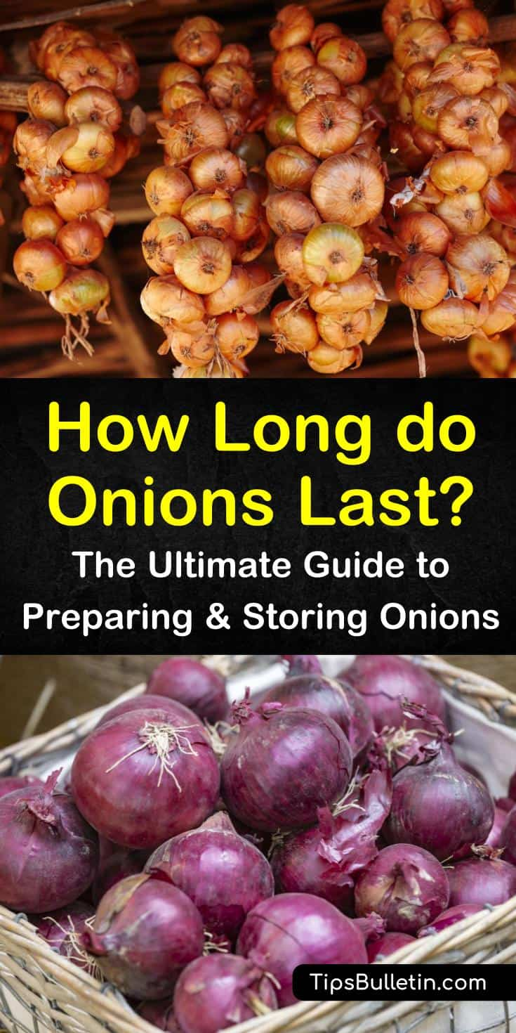 Whole onions can last two months at room temperature with proper ventilation, while cut onions can be kept in the fridge for a few days if they are in a plastic bag. Our storage methods show you how to keep onions from sprouting and rotting. #storingonions #howlongdoonionslast #onionstoragelife