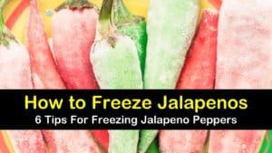 how to freeze jalapenos titleimg1