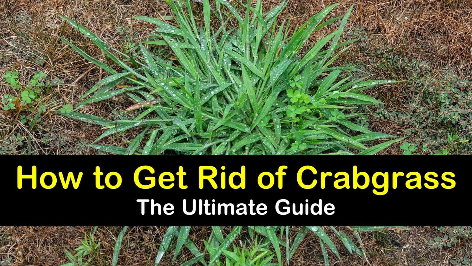 13 Clever Ways To Get Rid Of Crabgr