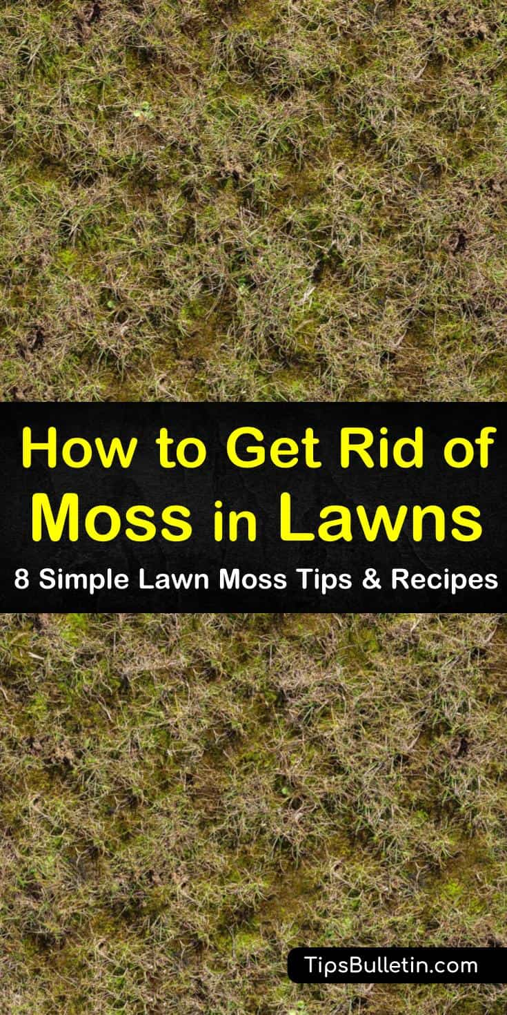 Learn amazing tips for how to get rid of moss in lawns using proper lawn care techniques. Try safe, non-toxic ingredients like dish soap to kill moss. Get rid of moss by checking for soil quality, excess moisture, and proper aeration. #howto #rid #moss #lawn