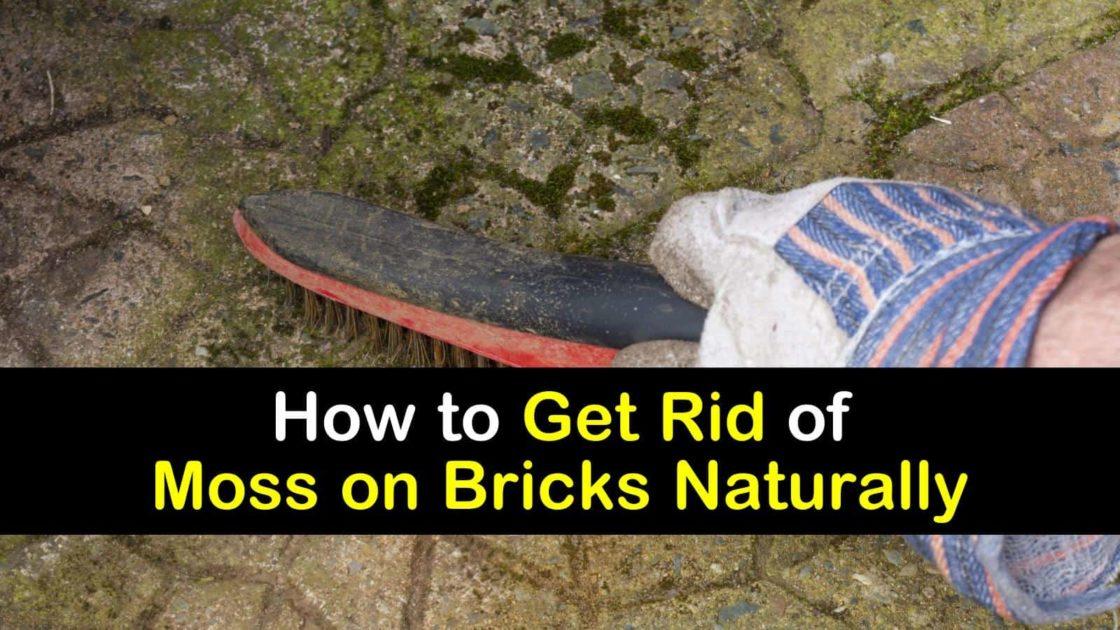 Smart Ways To Get Rid Of Moss On Bricks Naturally