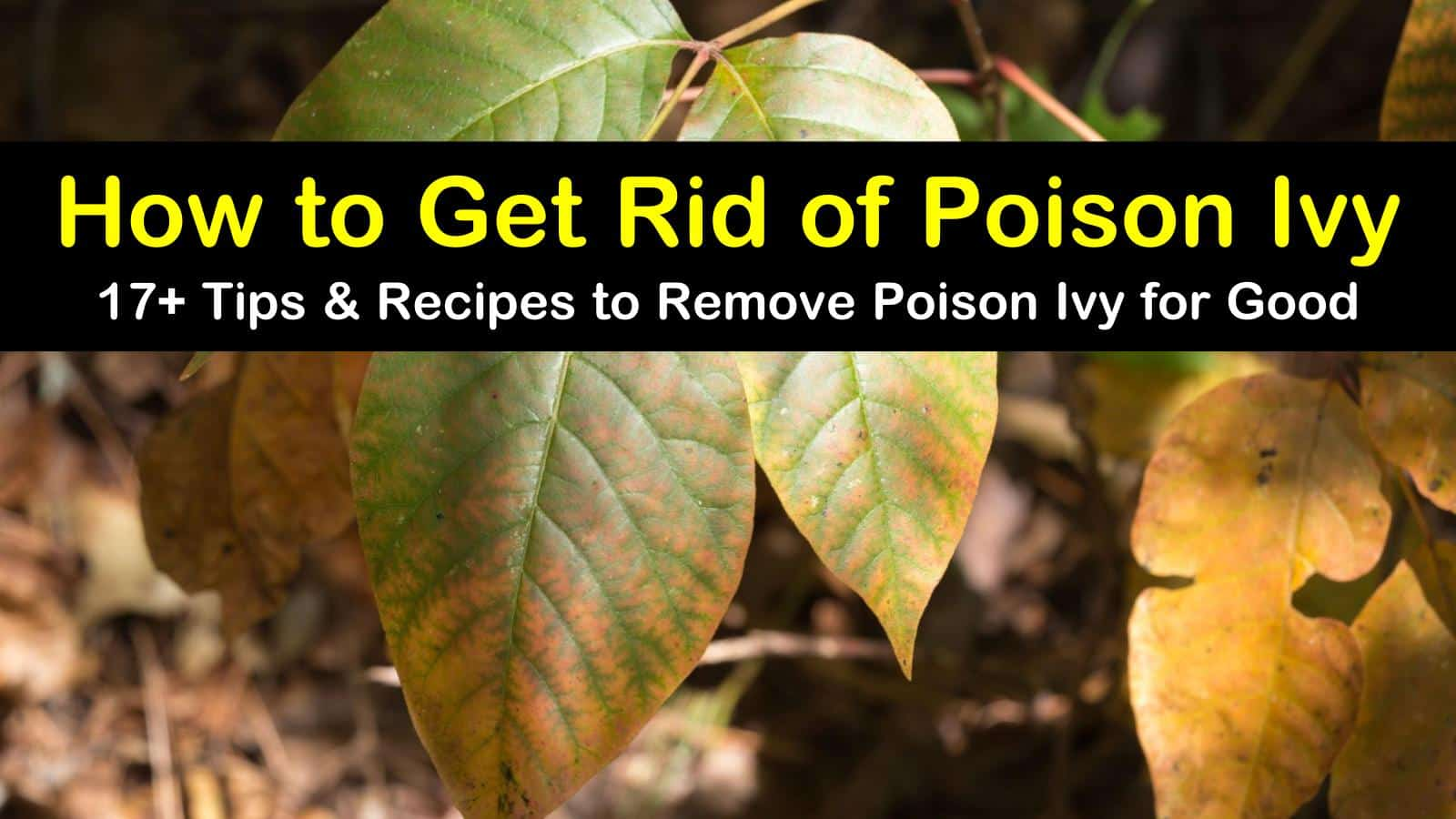 17 Smart Ways To Get Rid Of Poison Ivy For Good