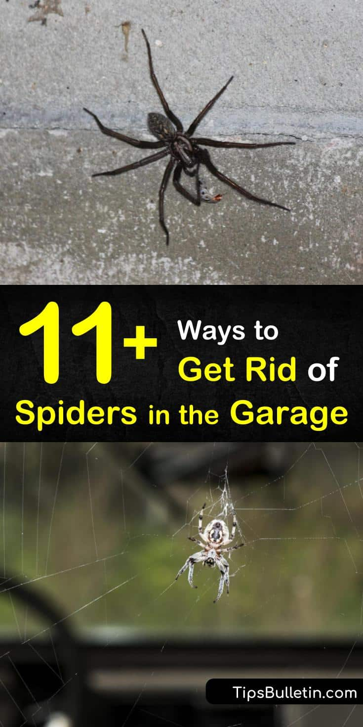 Looking for a natural way of how to get rid of spiders in the garage? These great DIY solutions and recipes include peppermint essential oils, vinegar, and horse chestnuts. Discover the best strategies to use when cleaning spiders out of your garage. #spiders #garage #getridofspiders