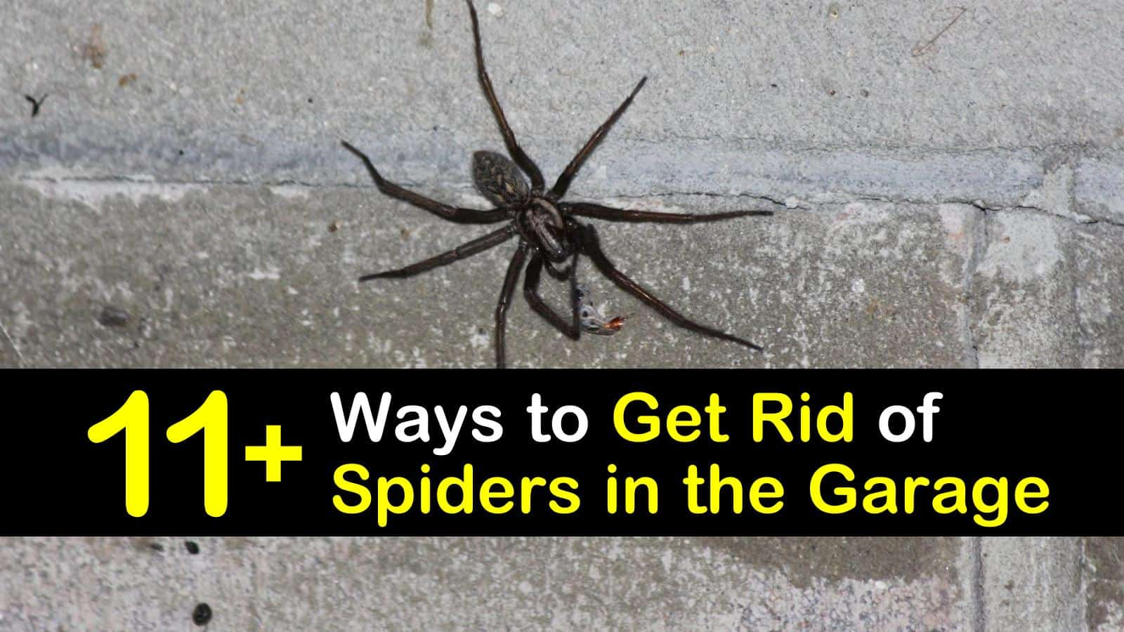 how to get rid of spiders in the garage titleimg1