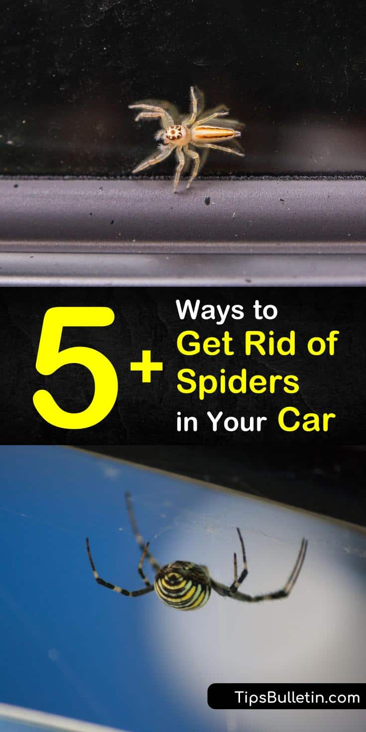 Find out how to get rid of spiders in your car the natural DIY way. We help you find the perfect way to remove existing spiders from your car and show you how to prevent them from coming back with our tips and recipes. #spiders #car #spiderincar #pestcontrol