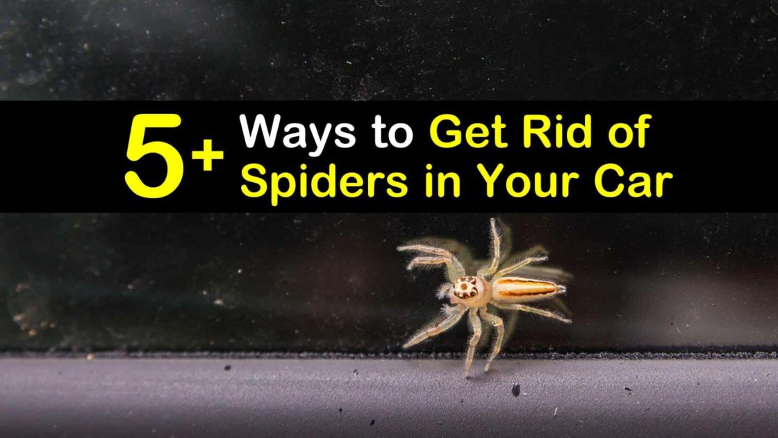 How To Get Rid Of Spiders In Side Mirror