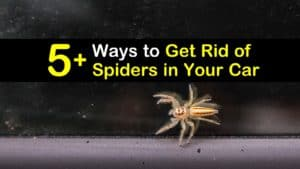 how to get rid of spiders in your car titleimg1