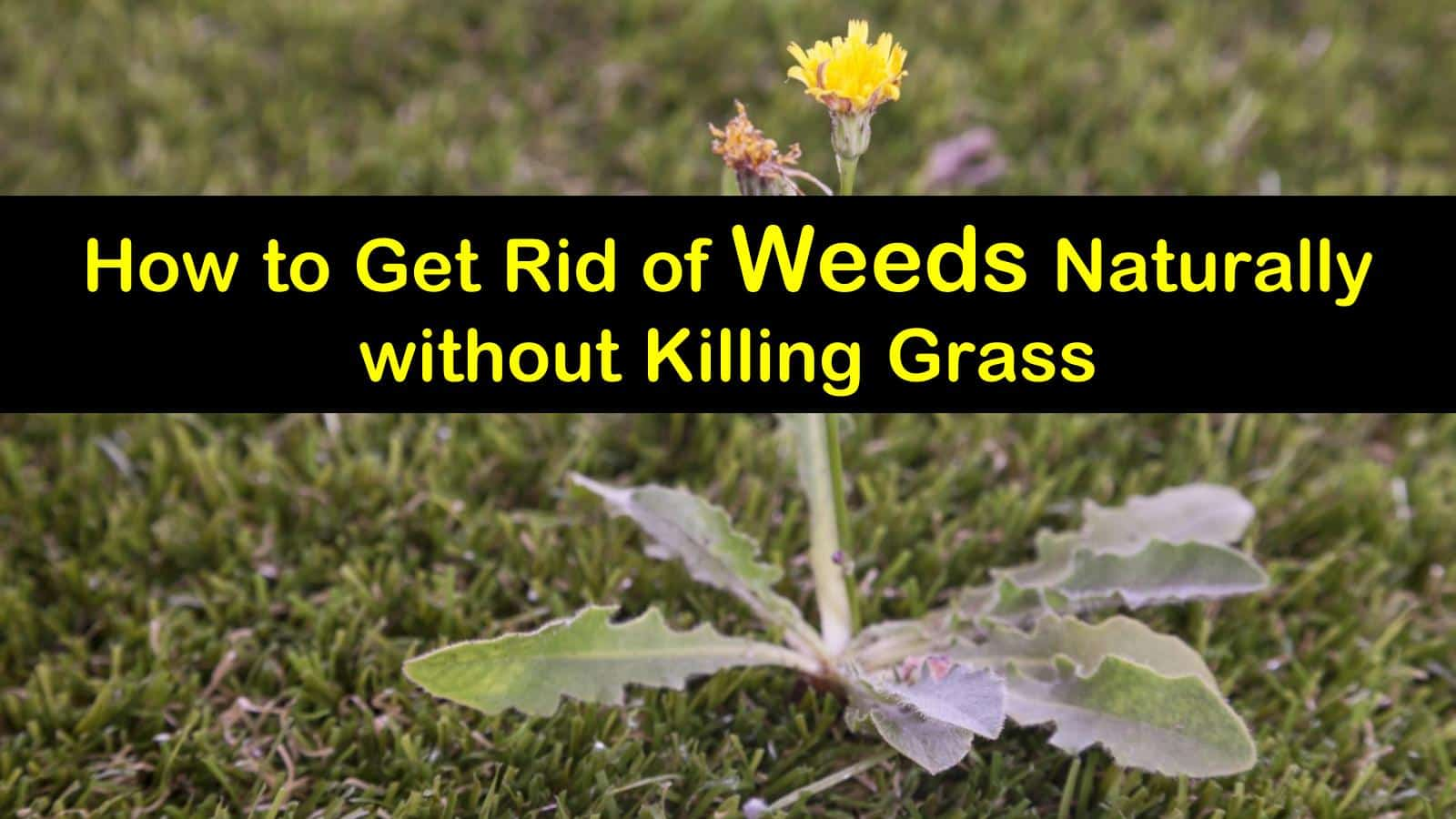 18 Natural Ways To Kill Weeds But Keep The Gr