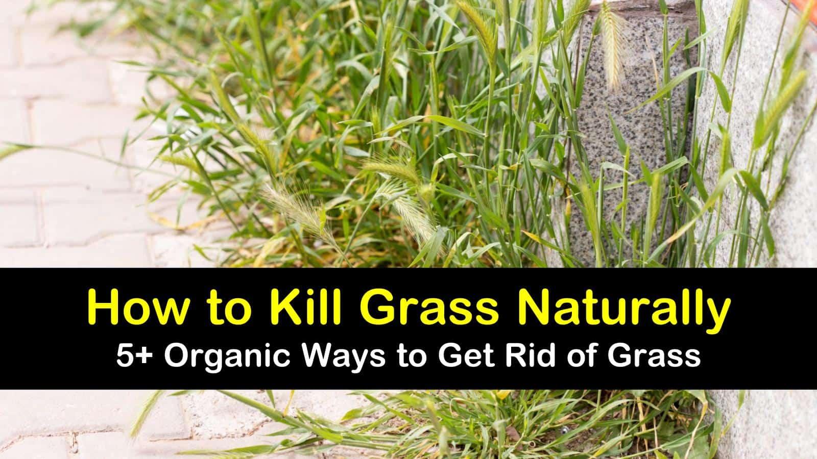 how to kill grass naturally titleimg1