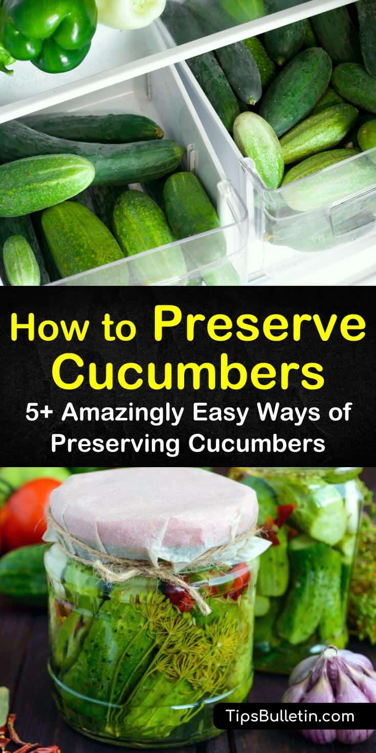 Learn how to preserve cucumbers with or without pickling. Try a delicious pickles recipe, or a yummy way to prepare cucumber chips when dehydrating them. Follow these simple guides for canning, pickling, freezing, and even drying your cucumbers. #preserve #cucumbers #storecucumbers