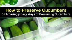 how to preserve cucumbers titleimg1