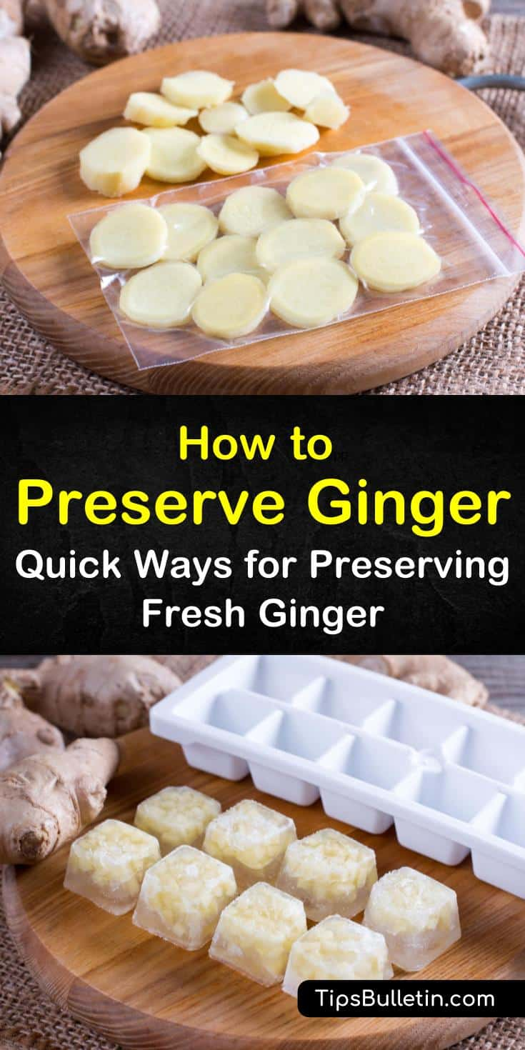 When learning how to store fresh ginger properly you will no longer have to worry about wasting it. From freezing to drying we show you several methods you can use to successfully store and preserve ginger for later use. #ginger #freshginerroot #preserveginger