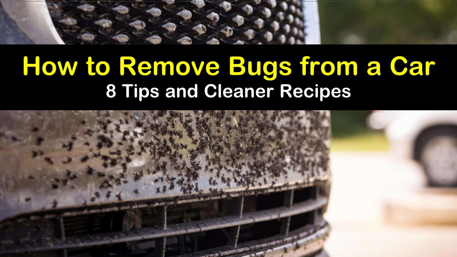 how to remove bugs from a car titleimg1