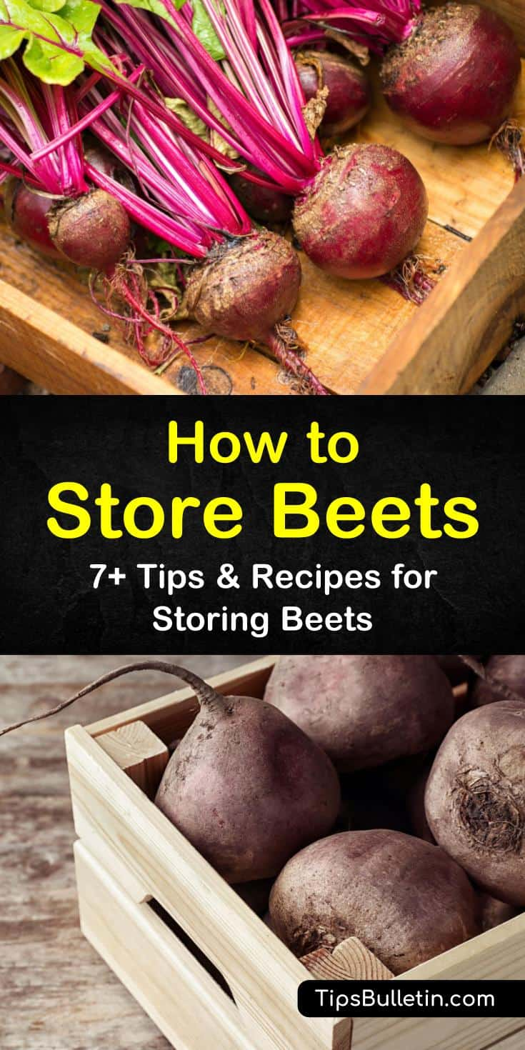 Here are a few tips and recipes to show you the many ways to store beets safely. Store fresh beets from garden in a root cellar, in fridge or freezer. Use our beet canning recipe for long term storage. #storingbeets #howtostorebeets #beetstorage