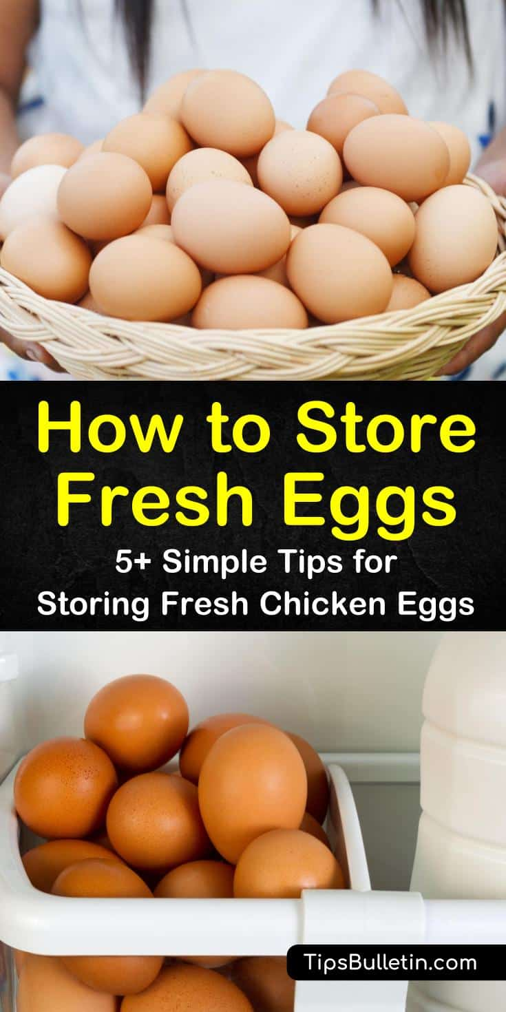 Knowing how to store fresh eggs is important when it comes to food storage. Eggs need to be stored properly, whether they are farm fresh or commercial. While you can store fresh eggs in a couple of ways, commercial eggs need to be refrigerated. #storingfresheggs #eggstorage #howtostoreeggs