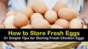 how to store fresh eggs titleimg1