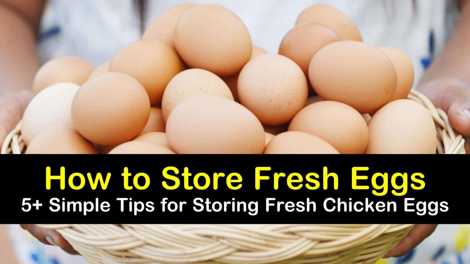 how to store fresh eggs titleimg1