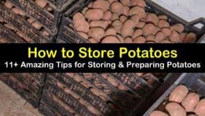 how to store potatoes titleimg1