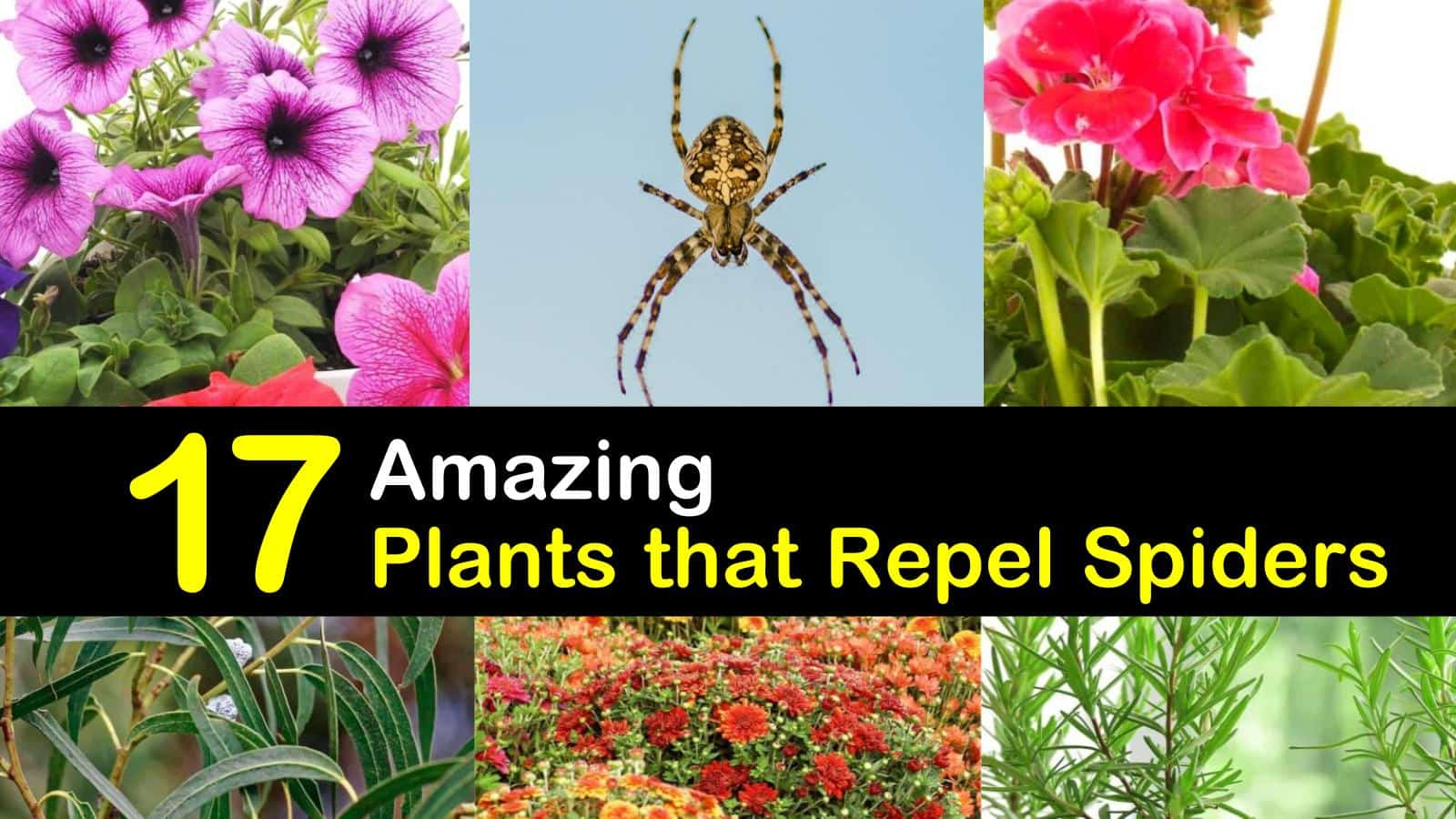 plants that repel spiders titleimg1
