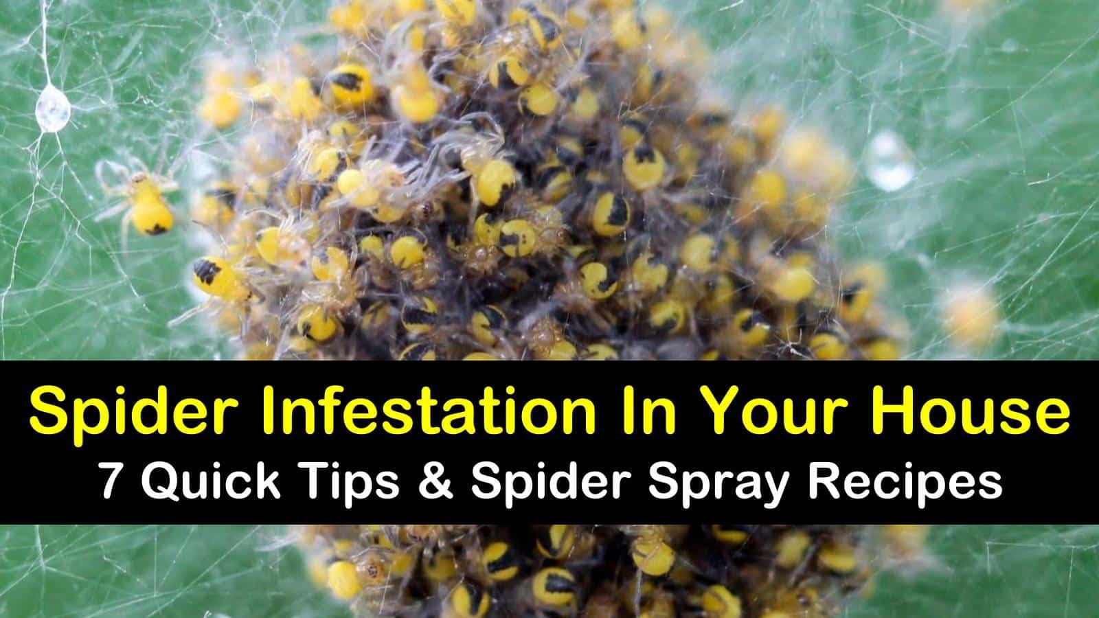 spider infestation in house titleimg1