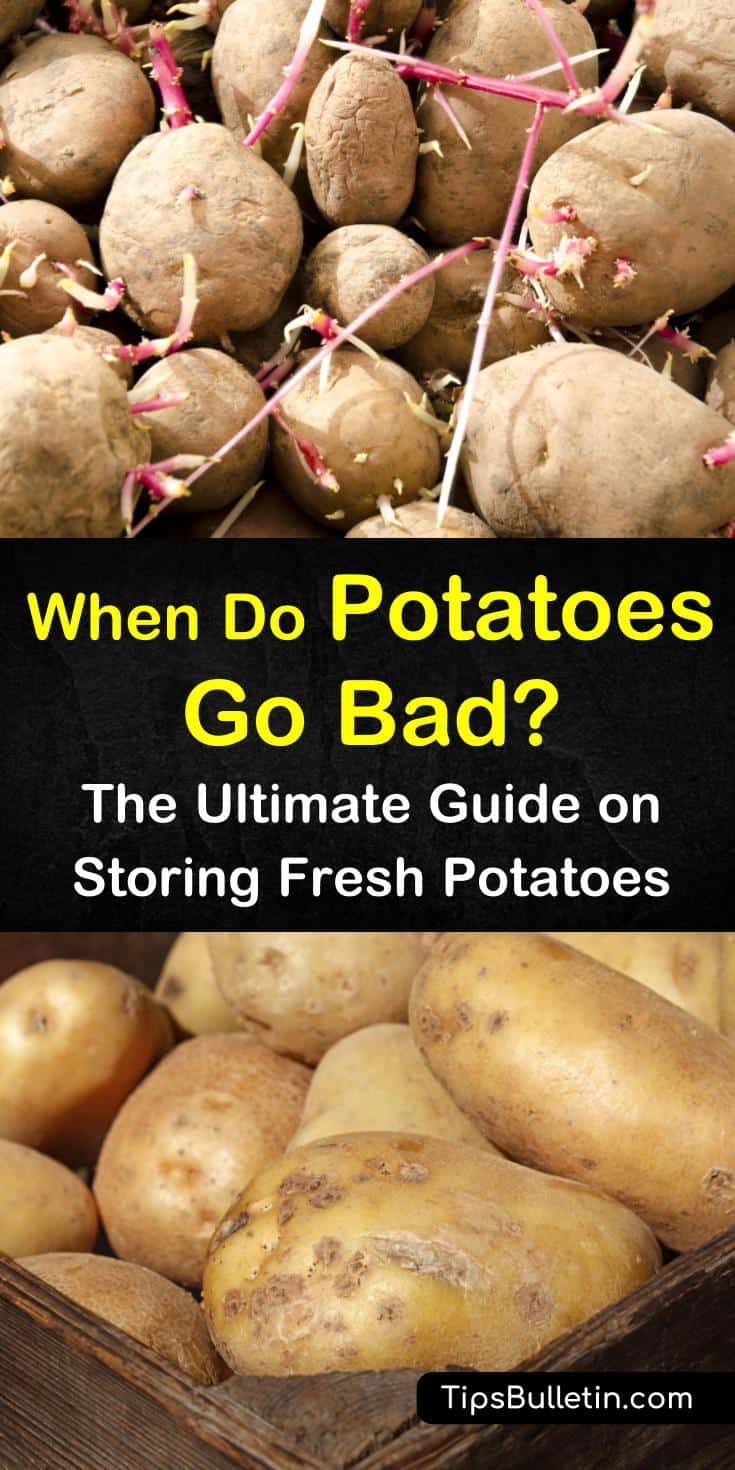 Curious about when do potatoes go bad? This guide will help you determine the shelf life based on how you store potatoes. It will also inform you what signs to look for when potatoes start to go bad, including sprouting, green discoloration, and turning soft. #potatoes #go #bad