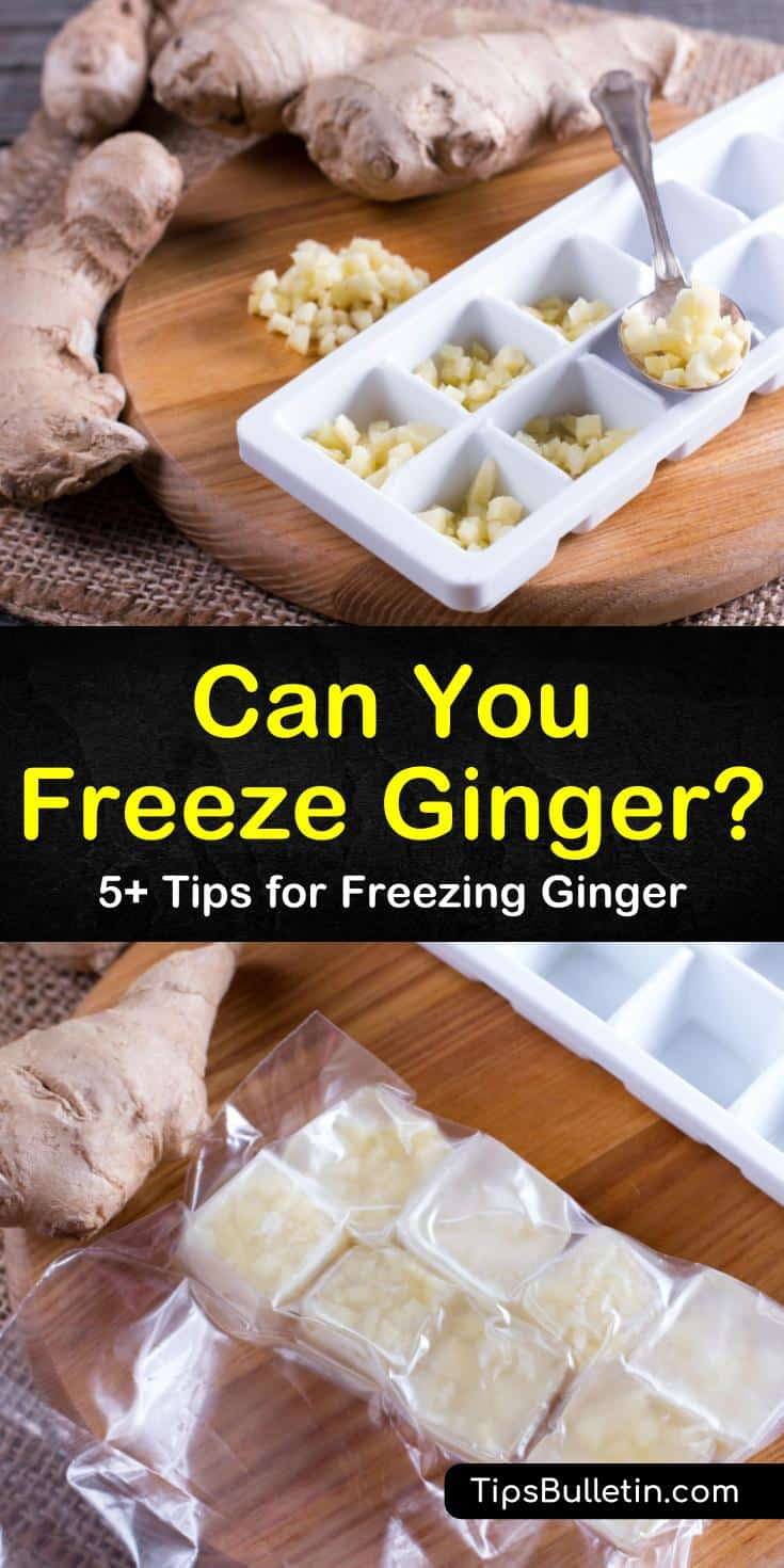 To keep fresh ginger longer you need to learn how to store ginger or how to freeze ginger. You can slice, dice, mince, or puree a piece of ginger for freezing or you freeze the ginger root whole. #ginger #freezeginger #howtofreezeginger