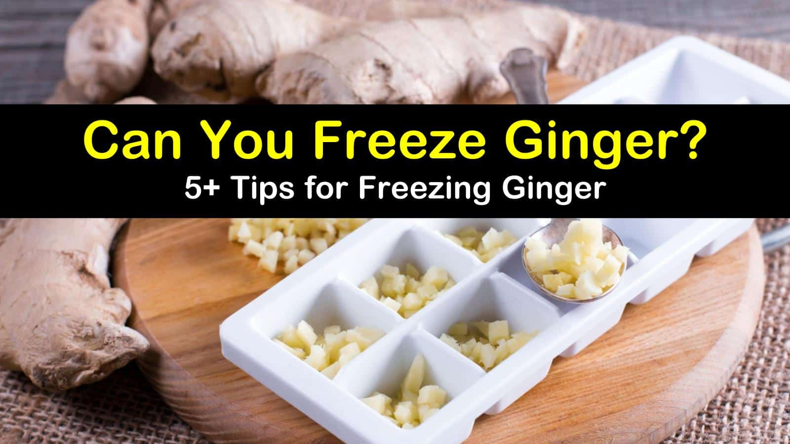 can you freeze ginger titleimg1