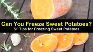 can you freeze sweet potatoes titleimg1