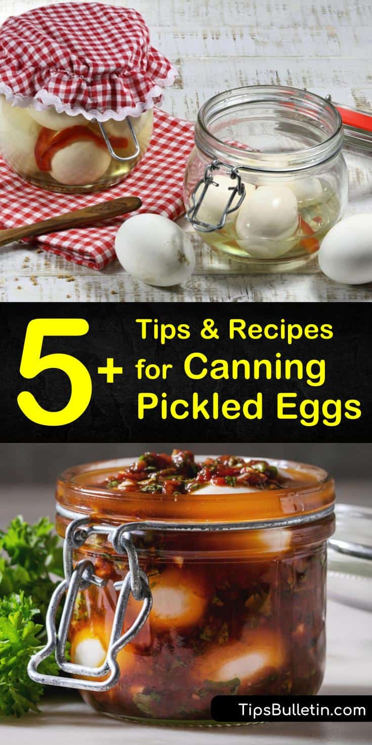 Discover the best recipes for canning pickled eggs and prepare them for long-term storage that lasts for months. Learn how to make sweet pickled eggs with a delicious pineapple recipe. Can eggs and beets for an explosion of flavors from sour to salty to sweet. #canning #pickled #eggs